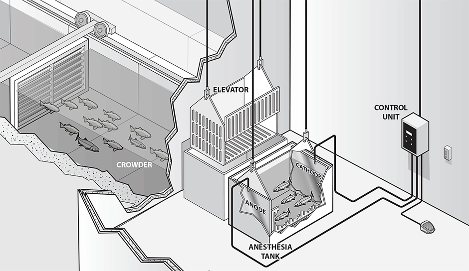 Typical EA-1000B hatchery installation